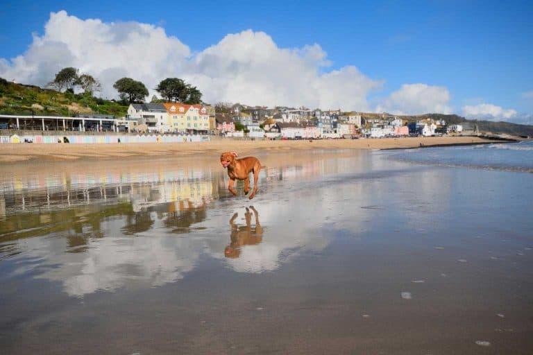 dog walking along beach in Dorset