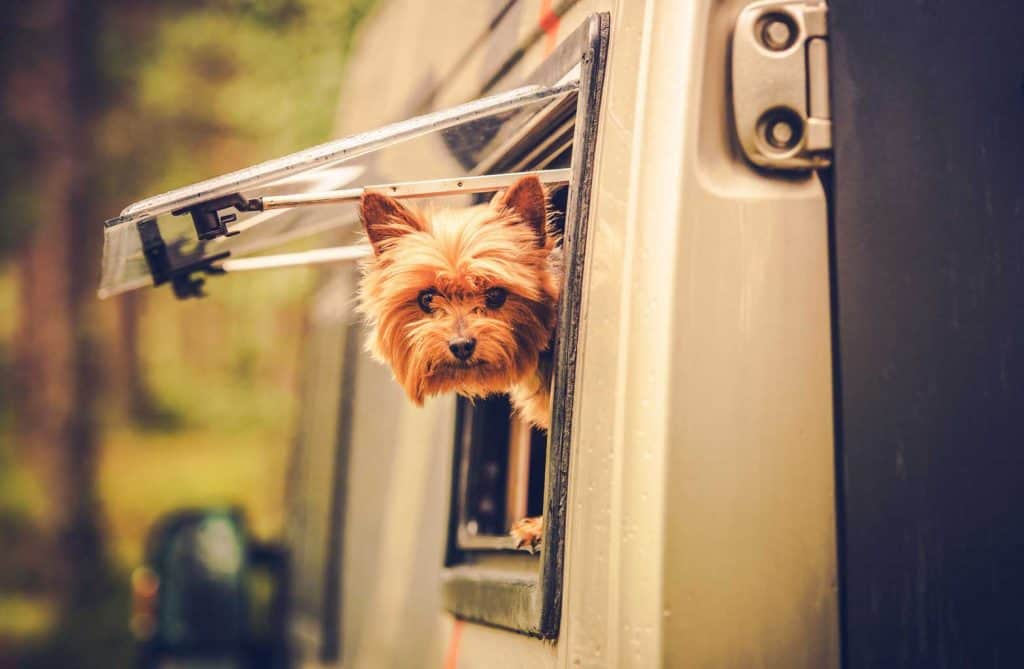 dog friendly caravan parks