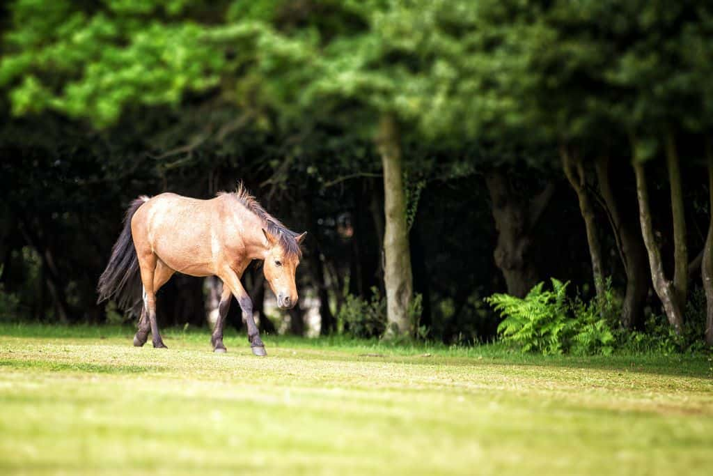 a wild horse grazing in the New Forest National Park