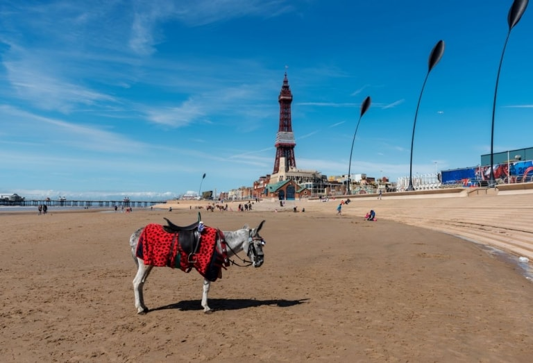 Donkey on beach in Blackpool for holiday parks in Blackpool
